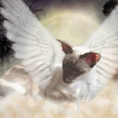 For all those dear Siamese of mine that are now gone.you each have a special place in my heart.never to be forgotten I Love Cats, Cool Cats, Baby Animals, Cute Animals, Cats 101, Cat Info, Siamese Kittens, Cat Illustrations, Cat Tattoos