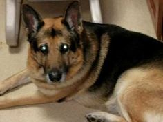 Dog's new lease on life cut short by cancer - http://www.freshcancernews.com/dogs-new-lease-on-life-cut-short-by-cancer/