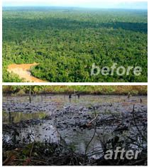 deforestation in indonesia and brazil essay Essay deforestation table of contents introduction 1 important facts  and atmospheric influences brazil's  brazil, indonesia, colombia.