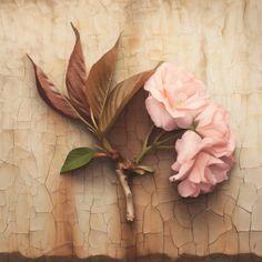 """""""No se trata de pintar la vida, se trata de hacer viva la pintura"""".Paul CézanneAl trazar sobre un lienzo en blanco los colores cobran vida, enese momento somos capaces de crear universos paralelos donde la realidad es superada por las pinceladas azarosas que cuentan las historias cotidianasdesde nuevas perspectivas. El papel de los artistas consiste …"""