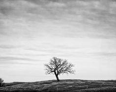 """""""Solitude"""" Photograph by keith dotson"""