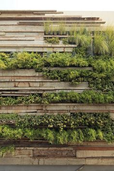 Green Wall / Zentro Office Building And Commercial