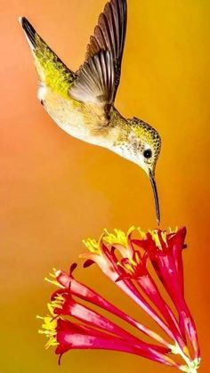 Image result for hummingbird dotted with pollen Pinterest