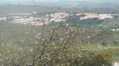 Gingeira em flor - e a Aldeia de Santo António das Areias - Vista da Colhereira de Baixo - Marvão.
