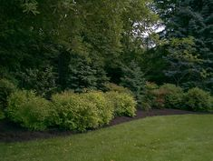 Traditional Landscape Privacy Screen Design, Pictures, Remodel, Decor and Ideas - page 3