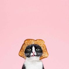 Meet Princess Cheeto, Star of the Funniest Cat Photo Series Ever - BlazePress