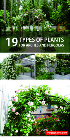 top 10 beautiful climbing plants for fences and walls all about fashion style pinterest. Black Bedroom Furniture Sets. Home Design Ideas