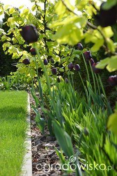 Ogród tworzę nowoczesny czyli wewnętrzna walka jak nie zostać kokoszką :) - strona 1713 - Forum ogrodnicze - Ogrodowisko