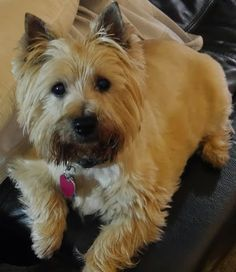 Col. Potter Cairn Rescue Network: Sunday Sweets! Cassie