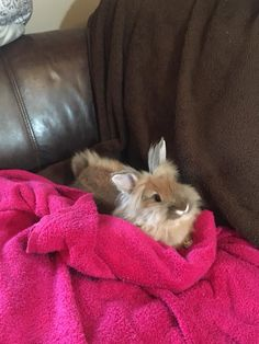 Tiny bunny on a BIG couch!
