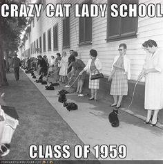Crazy Cat Lady School