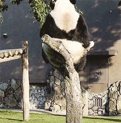 Ooops Panda!