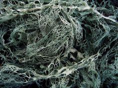 lace *lichen* by i n i m i n i*