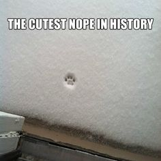 "A single cat pawprint just might be the cutest ""Nope"" in history."