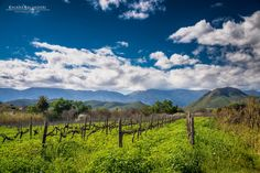 The vineyard in Calitzdorp Photos For Sale, Stock Photos, Time To Leave, Big Sky Country, Port Elizabeth, African Beauty, South Africa, Beautiful Places, Adventure