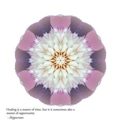 HEALING: Find balance, build resilience, and expand your heart as you find your own path to wholeness, aided by this stunning blend of award-winning images, inspirational quotations, and potent reflections on our amazing human experience. © David J. Bookbinder #pathstowholeness #flowermandalas #flowermandala #flowers #flower #mandala #mandalas #spiritual #self-help #healing
