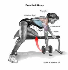 dumbbell row - Google Search