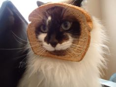 a cat with bread on its face