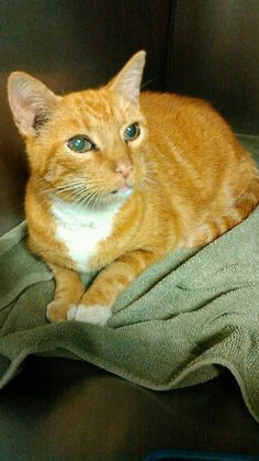 Found cats CT on Pinterest | Found Cat, Lost Pets and ...