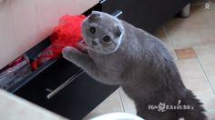 En lo más fffres.co: Los vídeos de gatos nos siguen robando el corazón #gatos #walker_art_museum #festival_de_vídeos_de_gatos #golden_Kitty