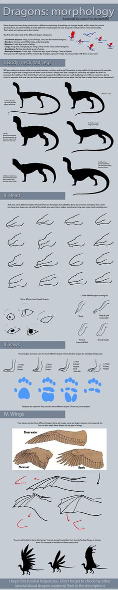Dragon tutorial: Morphology by Lucie-P on DeviantArt