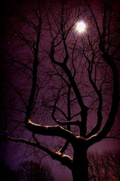Moon and Stars cast a radiant glow from the purple sky onto the winter tree.