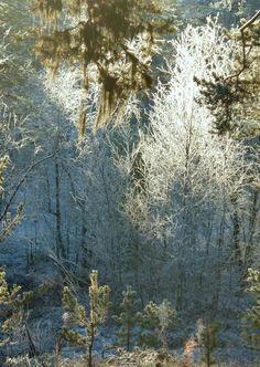 Kaunista, aurinkoista ja -15 C. Lappi 22.10.14  Lapland October 22. 2014 https://www.facebook.com/173696896121402/photos/a.173792659445159.1073741828.173696896121402/371534633004293/?type=1&theater