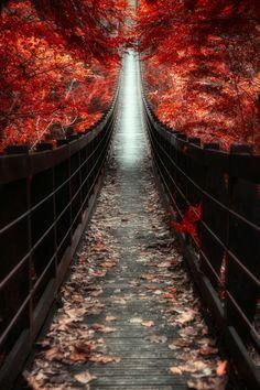 ~~The bridge leading to sky by Hanson Mao(毛延延)~~