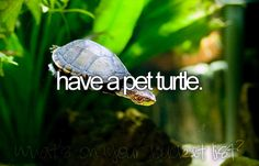 ✔️ #BucketList ~ Have a Pet Turtle ✅☑️ Done