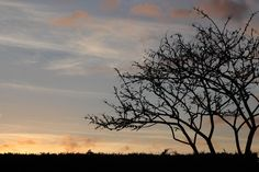 Sunset silhouette https://www.flickr.com/photos/97073929@N04/