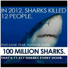 Save shark!! #scuba #underwater #lolo @Lolo Sianipar