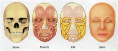 Image result for facial fat