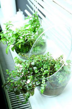 Green Aqua - Showroom by viktorlantos, via Flickr
