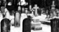 Living up to his spooky image, this spider likes to hang out in cemeteries.