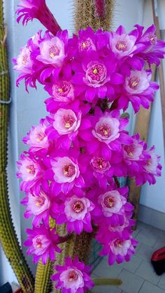 Flowering Cactus #coupon code nicesup123 gets 25% off at  leadingedgehealth.com