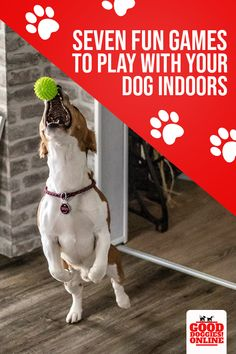 Stuck inside with your dog? Here are seven fun games and activities you and your dog can do to cure your boredom. Potty Training Girls, Puppy Training Tips, Fun Games, Games To Play, Potty Training Puppy Apartment, Puppy Schedule, Pet Sitting Business, Wild Animals Pictures, Puppy Pads