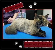 Sweet little Mary Jane looks and feels much better after her day at the salon. Cat Hairstyles, Pretty Cats, Healthy Choices, Mary Janes, Feels, Things To Come, Sweet, Animals, Candy