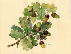 Afbeeldingsresultaat voor image of acorns and oakberries Watercolor Leaves, Watercolor Sketch, Watercolor Animals, Watercolour Painting, Plant Illustration, Botanical Illustration, Woodland Art, Nature Artists, Oak Leaves