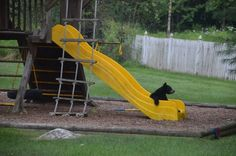 Baby bear playing in someone's backyard in my town.