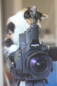 Feline Filmmaker. Just smile for the kitty!!❤️❤️❤️❤️kitties!!!!