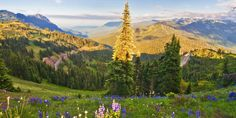 The Ultimate 3-Way: Olympic National Park #travel #roadtrips #roadtrippers