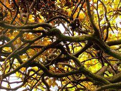 Labyrinth by uwebwerner, via Flickr