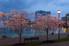Been in Newport News, VA from then from 2010 till present. Cherry Blossoms At City Center in Newport News, VA Newport News Virginia, Virginia Beach, Oh The Places You'll Go, Places To Visit, Suffolk Virginia, Garage Solutions, Elizabeth City, Chincoteague Island, Hampton Roads