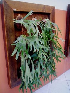 17 Plants to build a vertical garden Vertical Garden Plants, Ferns Garden, Garden Shrubs, Outdoor Plants, Staghorn Plant, Fern Plant, House Plants Decor, Plant Decor, Vertikal Garden
