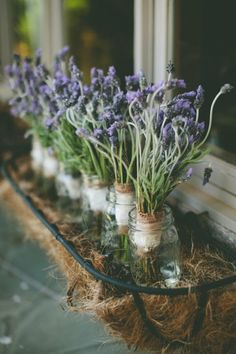 Lavender Cottage:  Window box with #lavender.