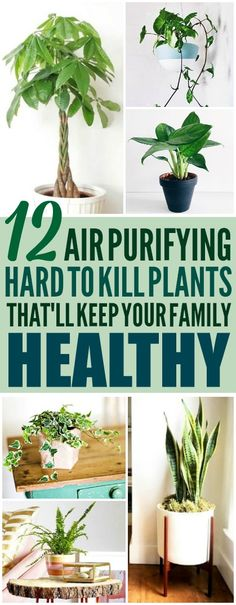 These 12 air purifying plants are THE BEST! I'm so glad I found these AMAZING tips! Now I have some great ideas for low maintenance air purifying plants for my home! Definitely pinning!