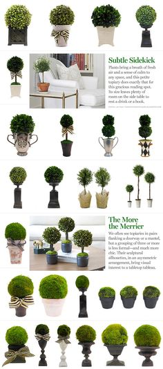 Looking for Artificial Topiary Trees? Have a look at our extensive range of quality topiary trees and plants. Browse our range and buy artificial topiary trees online. Boxwood Topiary, Topiary Trees, Boxwood Planters, Topiary Decor, Topiary Centerpieces, Artificial Topiary, Deco Champetre, Outdoor Gardens, Modern Gardens
