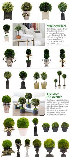 INSPIRATION :: Ideas for topiary arrangements...from #OneKingsLane. Moss balls & boxwood, pots & urns...
