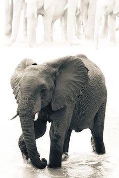 Sabie Elephant by Mario Moreno, via 500px