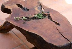 burl wood coffee table with succulents. I have one of these, without plants and a couple extra tops I'd like to make into shelves, for studio or guest room.